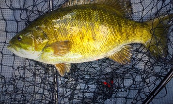 Three Can't-Miss Tactics For Wary Postspawn Smallmouths
