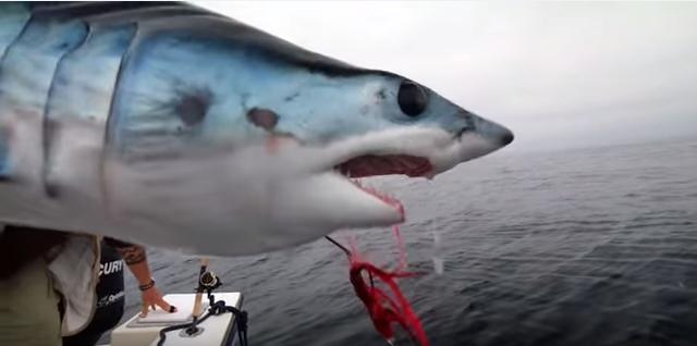 Video: The Big Lebowski Goes Shark Fishing