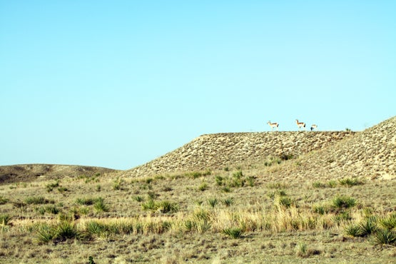 httpswww.fieldandstream.comsitesfieldandstream.comfilesimport2014importBlogPostembed2011_October_TX_antelope_hunt_ground_blinds_for_mule_deer_140.jpg