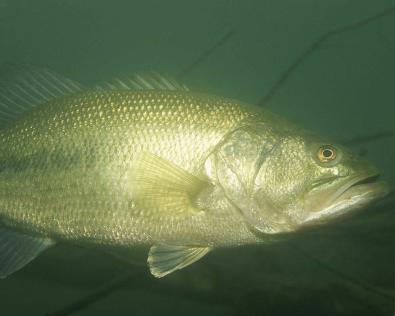 Do You Fish Shallow Or Deep On That First Warm Spring Day?