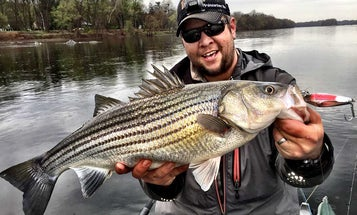 Three Easy Ways to Catch More Striped Bass In Rivers