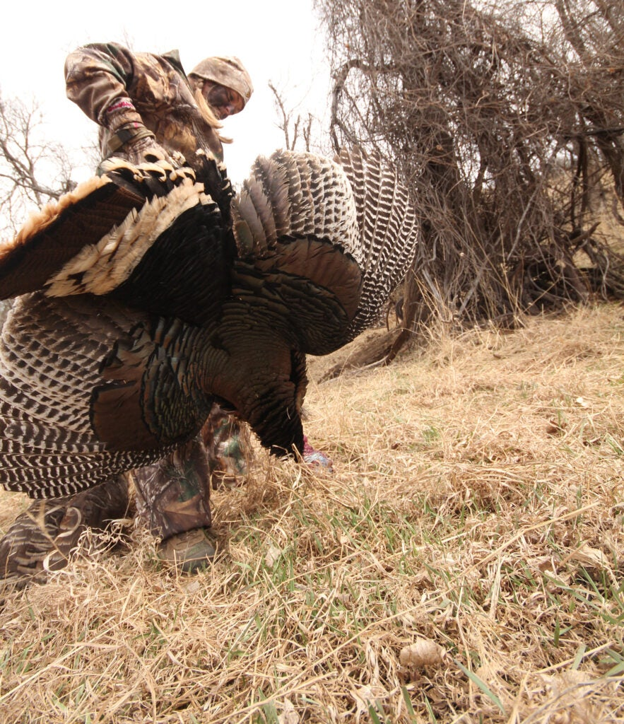 turkey calling