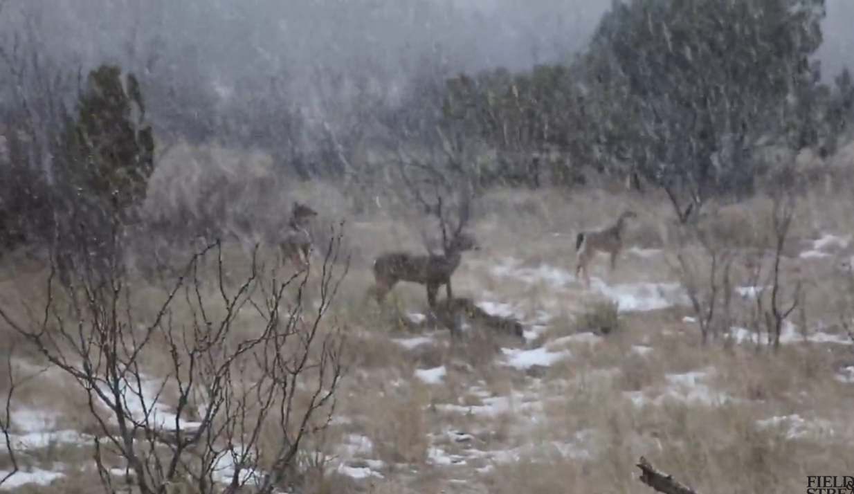 Texas Snowstorm Brings Out Mature Bucks