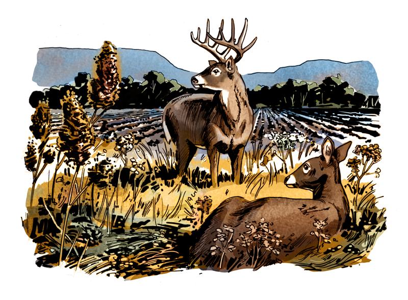 Deer Hunting Tips: Open Up the Lockdown