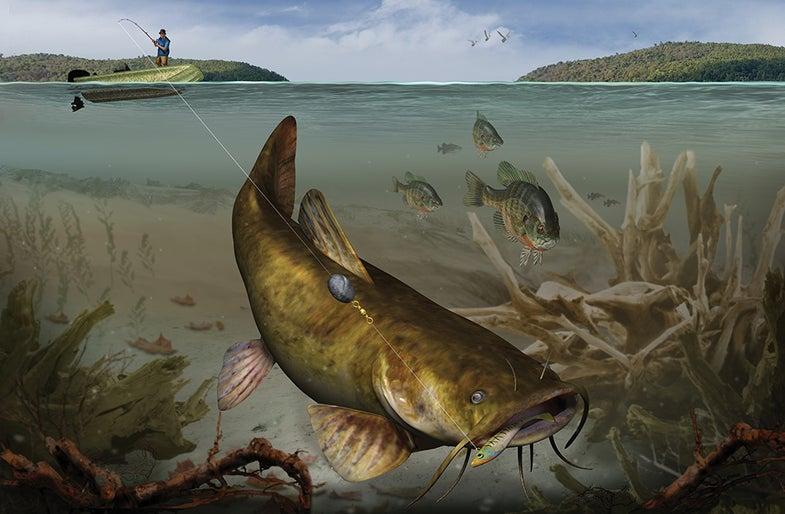 Smoke a Flattie: Tactics for Big Flathead Catfish