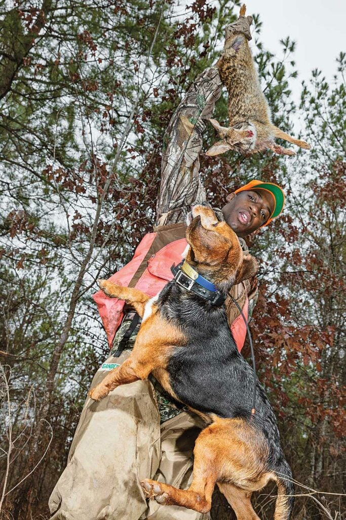 beagle jumping for rabbit