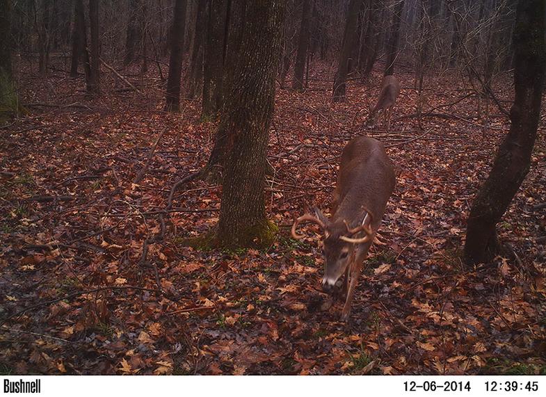 Still Some Surprises in the Northeast Deer Woods