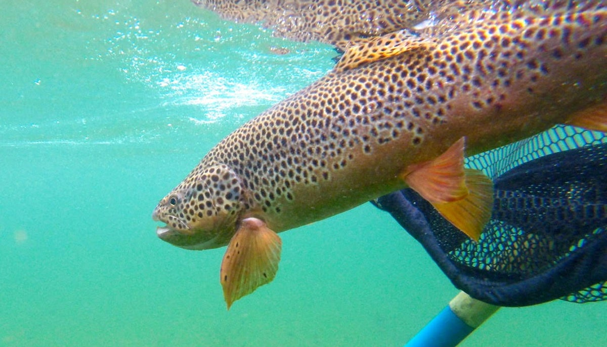 beautiful trout, most beautiful trout, trout fishing, fishing, kirk deeter,