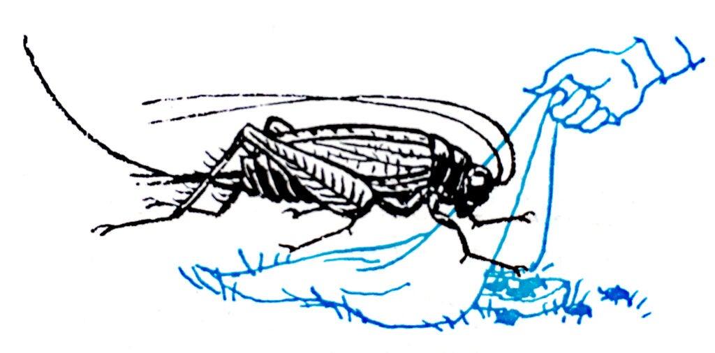 fishing bait tips