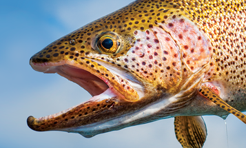 The 100 Best Fishing Camps
