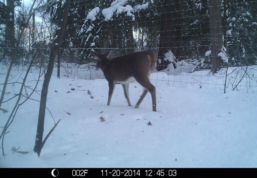 Woods Quieter, But Bucks Still Vulnerable