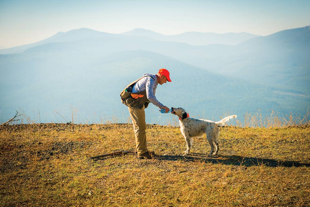 hunter giving water to english setter hunting dog