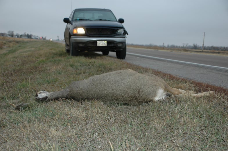 Montanans Are Chowing Down on Road-Killed Deer
