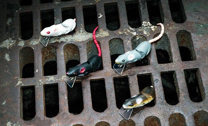 lures, rats, bass fishing, summer