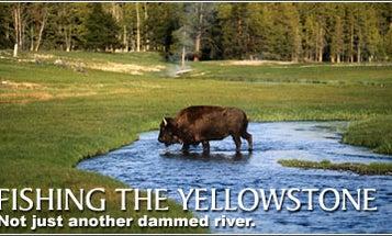 Run Free, Yellowstone