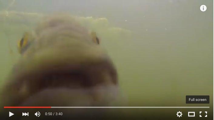 Ten-Pound Largemouth Eats GoPro