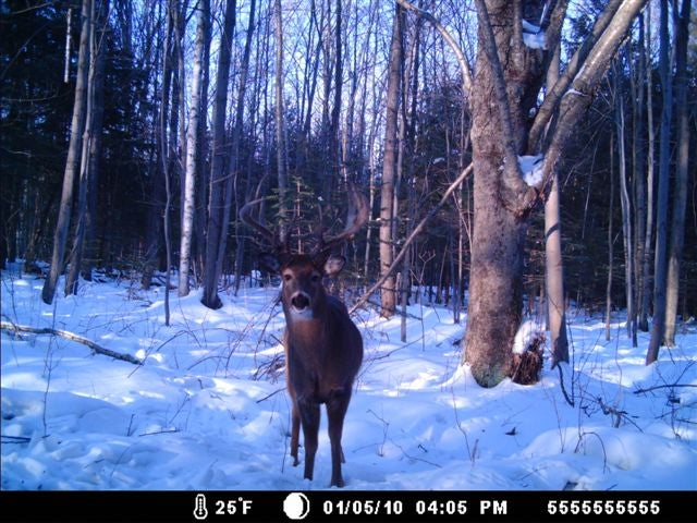 httpswww.fieldandstream.comsitesfieldandstream.comfilesimport2014importImage2010photo38356trail_cam1.jpg