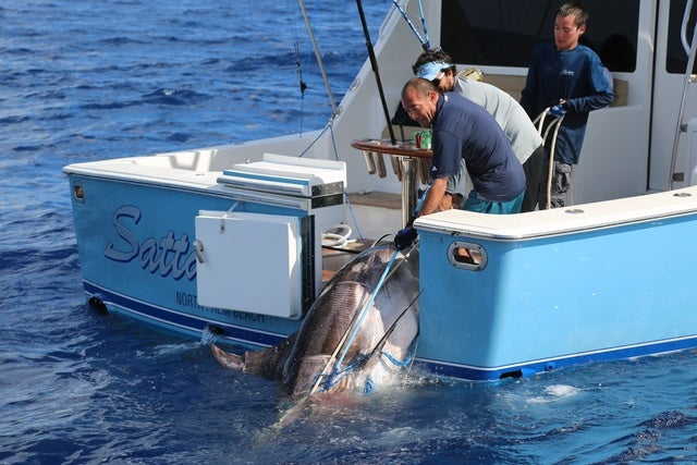Possible Record: Florida Teen Reels in 693-Pound Swordfish