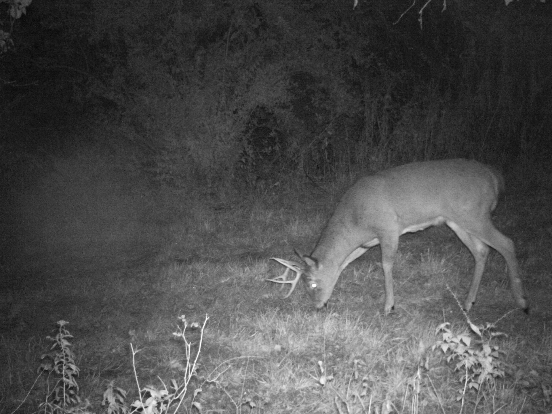 Rut Report: Acorns Are the Ticket in the Northeast Right Now