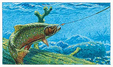 Hook more trout on sinking line