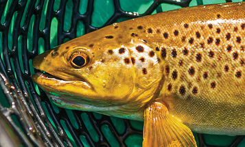 Trim Your Flies Streamside to Hook More Trout