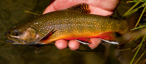 Trout in the Tribs: How to Fish a Stream in Early Spring