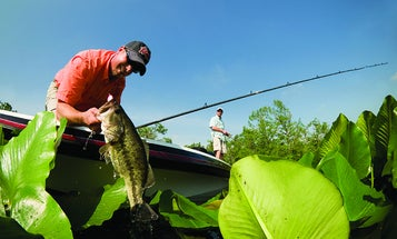 Fish Frogs Over a Lilly Pad Bed for Big Summer Bass