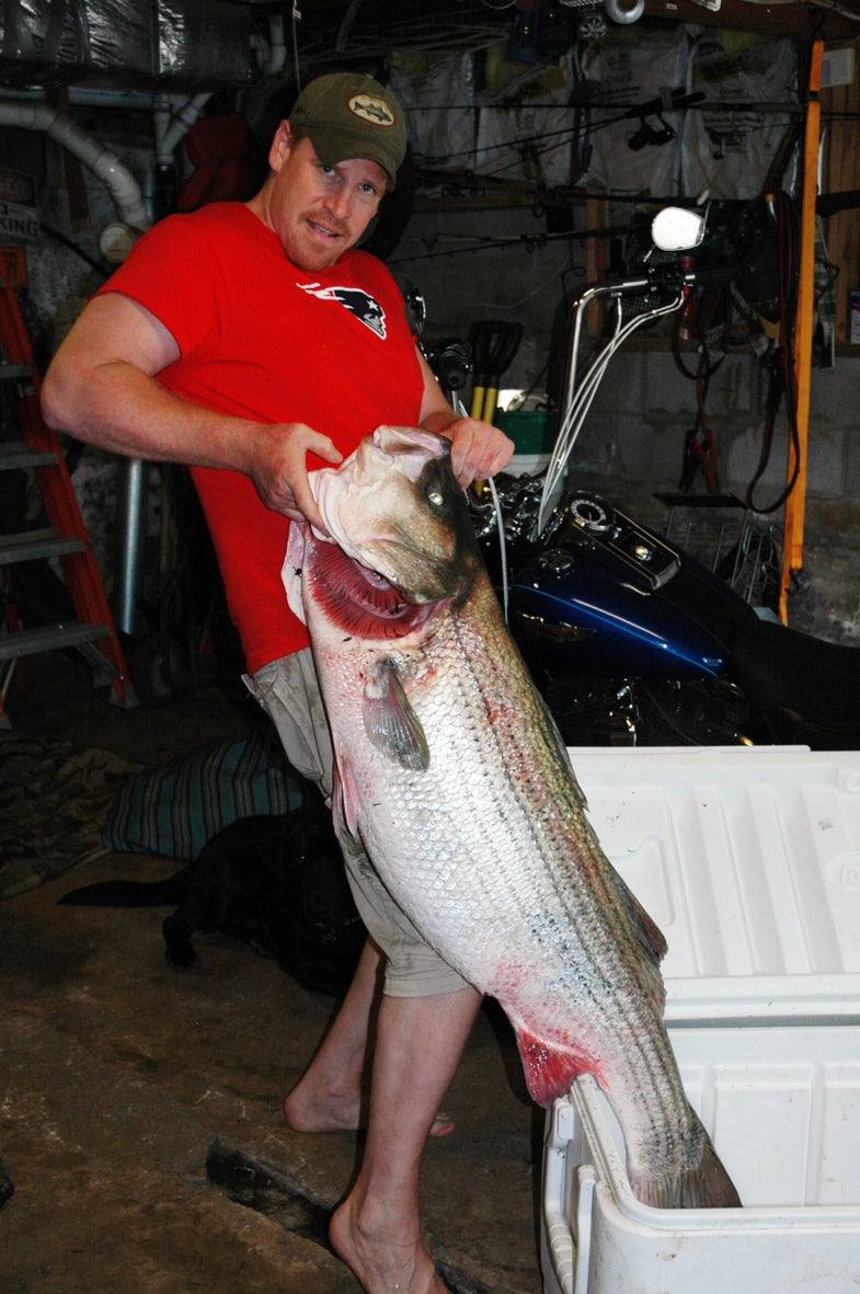 Exclusive Photos: The World Record Striped Bass