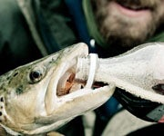Can Coca-Cola Save a Dying Fish?