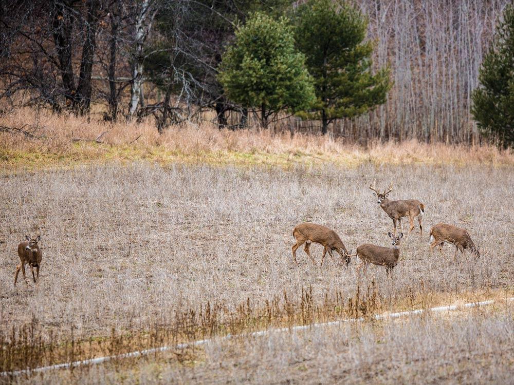 Bucks seeking late-cycle does