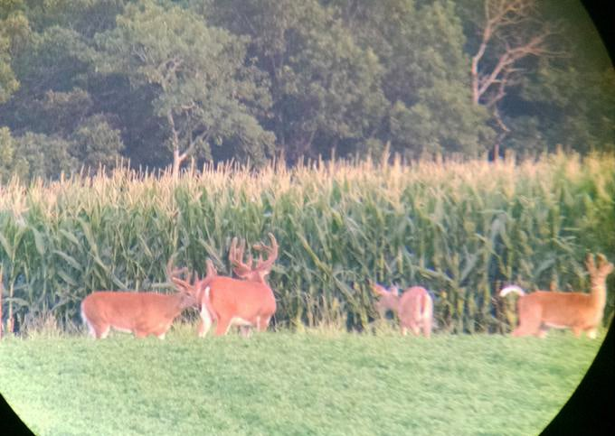 Video Tip: How to Digiscope a Buck
