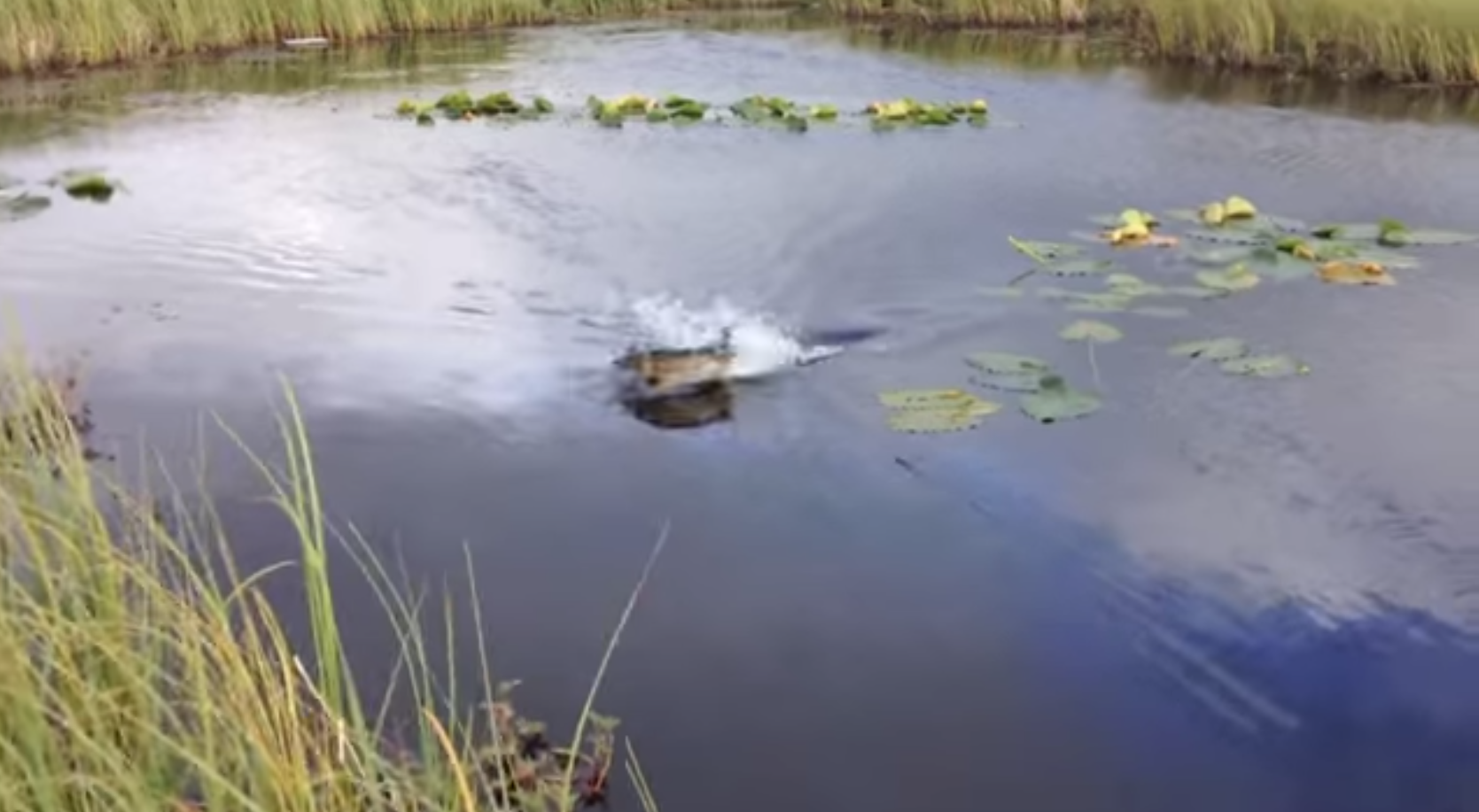 Video: Pike Goes Airborne to Hit Topwater Bait
