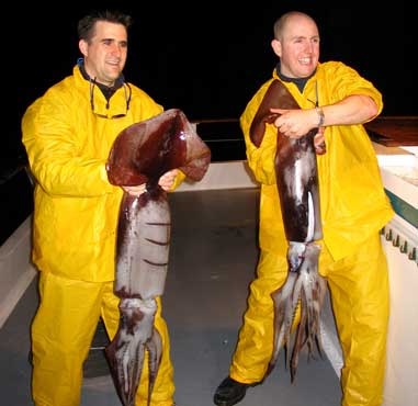 Giant Humboldt squid have been moving north