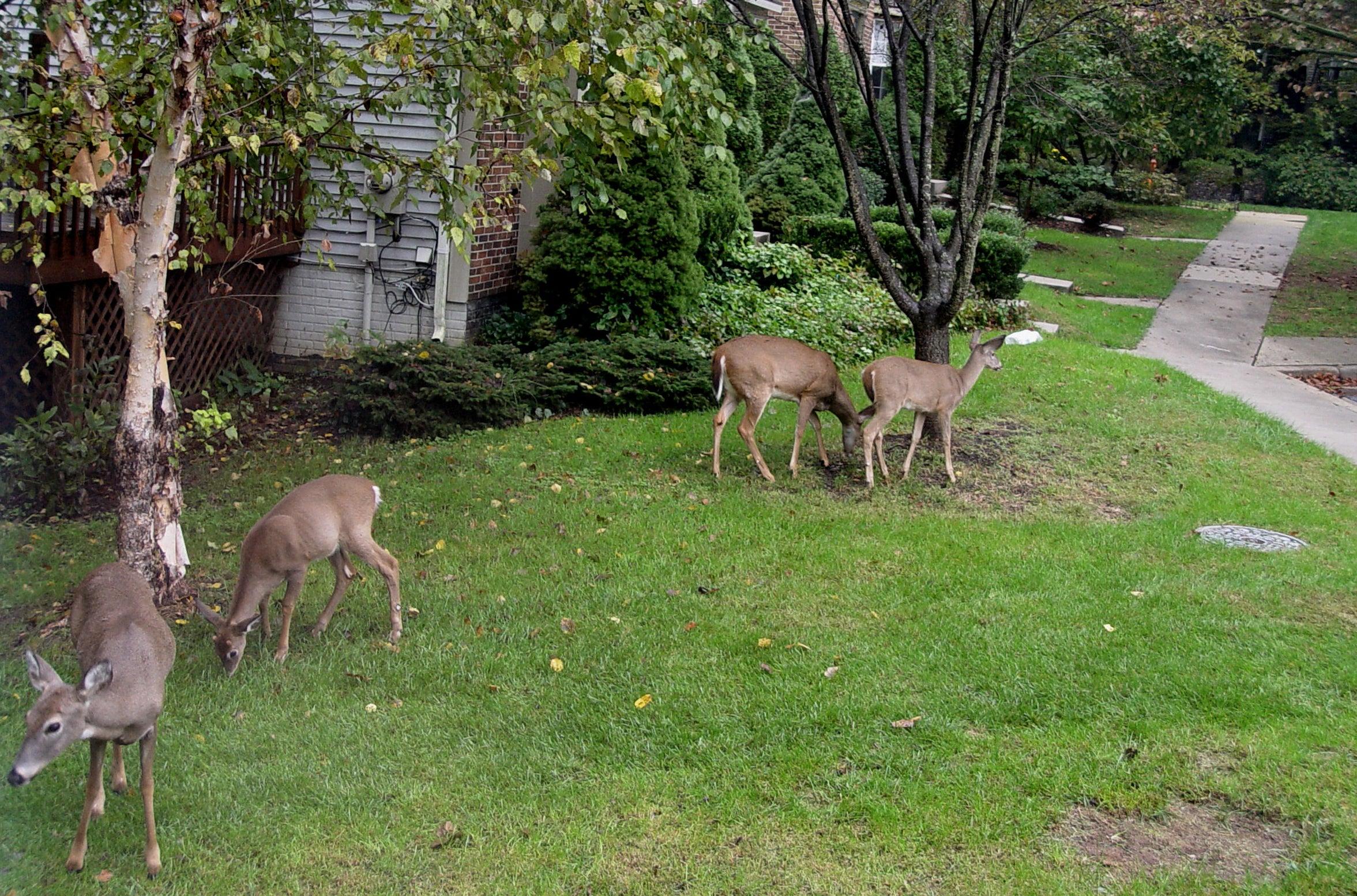 Home Deer