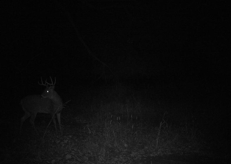 Young Bucks Getting Active