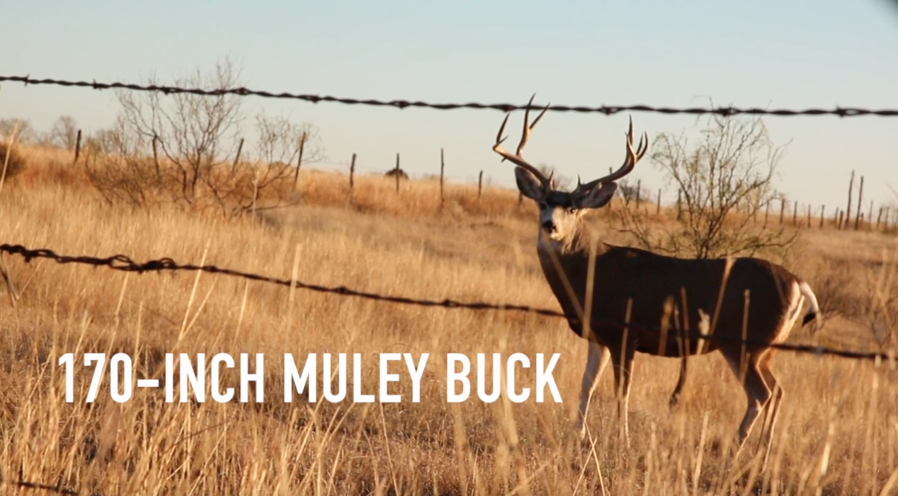 Video: Giant Muley in Bow Range; Best Action Still to Come for Texas Brush Country Hunters