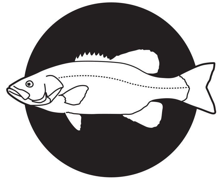 Smallmouth bass illustration live bait fishing
