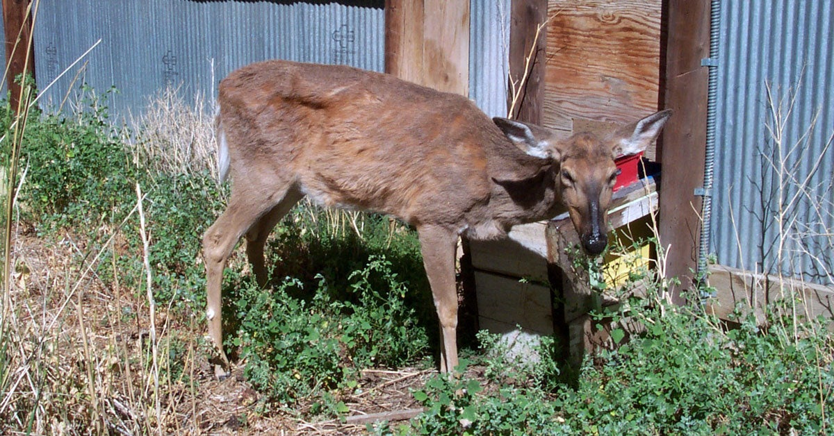 Chronic Wasting Disease Spreads in Ohio