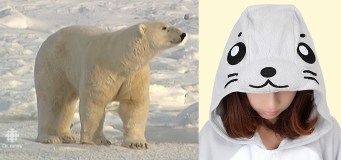 """""""Polar Bear Capital of the World"""" Cancels Trick-or-Treating to Protect Children"""