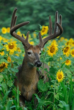 Hunt Like a Pro: Three Expert Deer Hunters Share Their Secrets