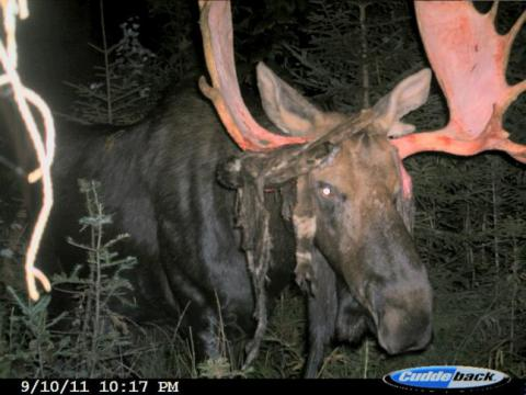 The 50 Best Photos from Round I of the F&S Fall Trail Cam Contest