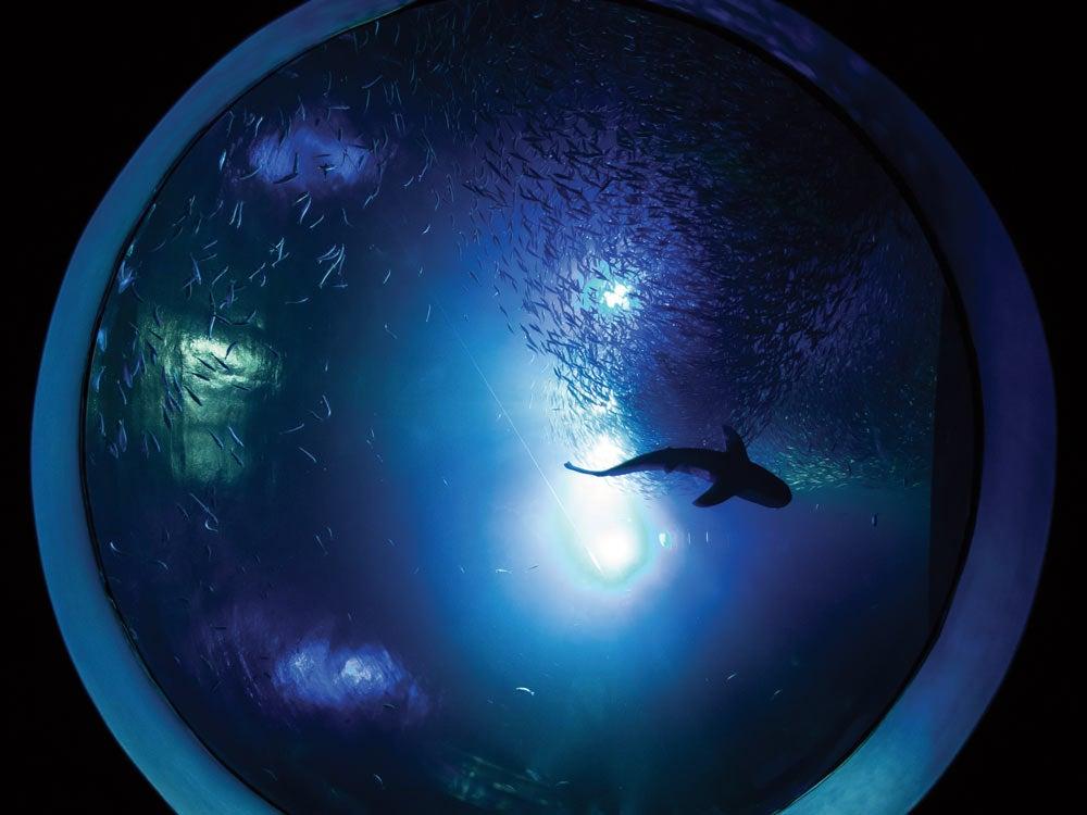 Bait Ball Wonders of Wildlife National Museum & Aquarium
