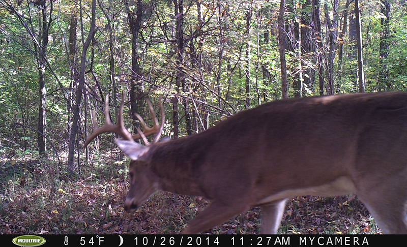 Bucks Are in the Chase Phase