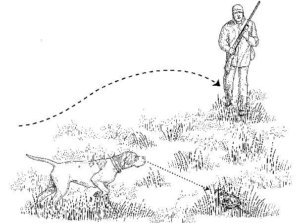 Upland Bird Hunting Tip: Keep Your Pup on Point