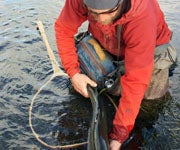 Getting Real About the Virtues of Catch-and-Release Fishing
