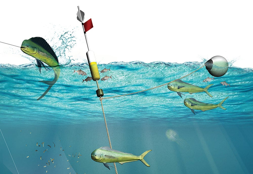 How to Catch Dolphin on Light Tackle