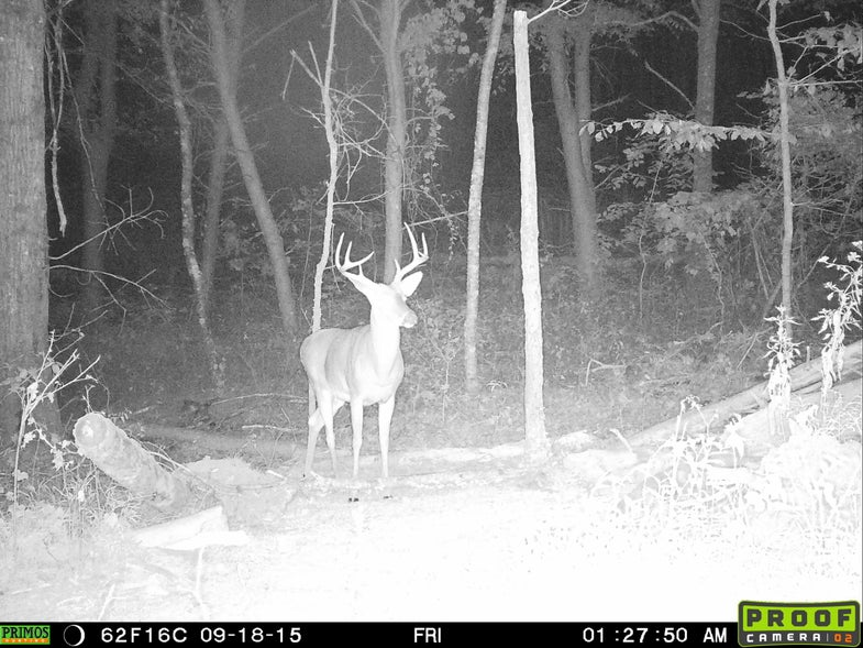 Bucks Dispersing in the Mid-South