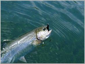LAKE POWELL: Bass Squared