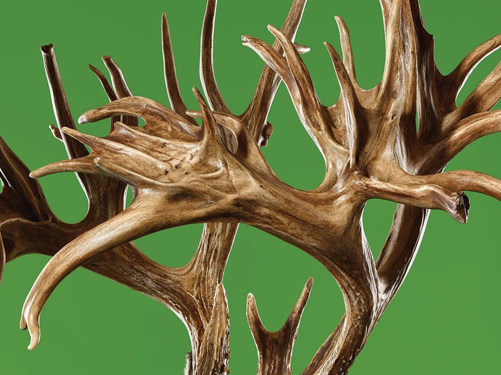 Tucker Buck world-record whitetail antlers