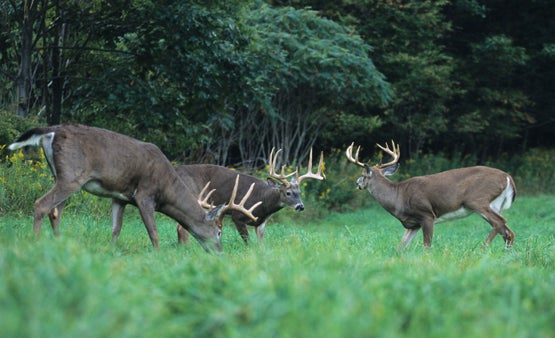 Overcome Early Bowhunting Season Mishaps and Harvest a Buck